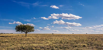 Photograph - I Stand Alone by Bonny Puckett