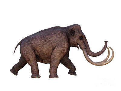 David Bowie - Ice Age Columbian Mammoth by Corey Ford
