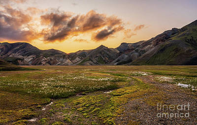 Sheep - Icelandic Highlands Vondugil Valley Sunset by Mike Reid