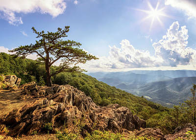 Grimm Fairy Tales - Iconic Pine at Ravens Roost - Blue Ridge Parkway by Susan Rissi Tregoning