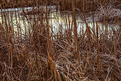 From The Kitchen - Icy pond #j4 by Leif Sohlman