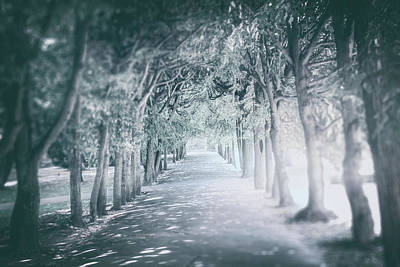 Beverly Brown Fashion Rights Managed Images - Icy Tree Lined Path Oliwa Park Gdansk Poland  Royalty-Free Image by Carol Japp