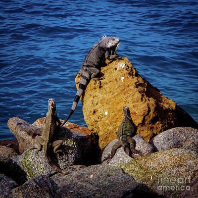 Winter Animals - Iguanas of Aruba by Ann Biddlecombe