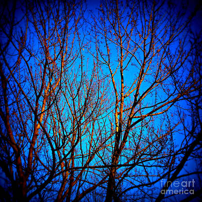 Frank J Casella Royalty-Free and Rights-Managed Images - Illuminated Branches - Square by Frank J Casella