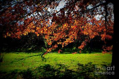 Frank J Casella Royalty-Free and Rights-Managed Images - Illuminated Golden Autumn Leaves by Frank J Casella