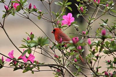 Black And White Flower Photography - Img_814022 - Northern Cardinal by Travis Truelove