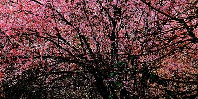 Jerry Sodorff Royalty-Free and Rights-Managed Images - Immersed in Blossoms by Jerry Sodorff