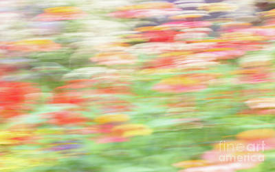 Travel Rights Managed Images - Impressionistic Zinnia Art Royalty-Free Image by Janice Noto