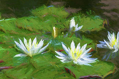 Royalty-Free and Rights-Managed Images - Impressions of Water Lillies by Peter Tellone