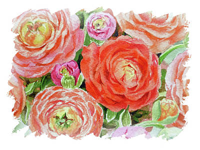 Popstar And Musician Paintings - Impulse Of Nature Watercolor Ranunculus Flowers Free Brush Strokes IX by Irina Sztukowski