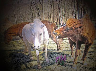 Palm Trees - In The Field With The Wild Crocus Is The Alpha Mare by Patricia Keller