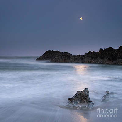 Royalty-Free and Rights-Managed Images - In the Moonlight by Masako Metz