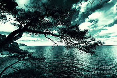 Vermeer Rights Managed Images - Incline pine tree over the sea Royalty-Free Image by ParaKrytous P