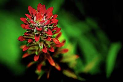World Forgotten - Indian Paintbrush in the Tropics by Heidi Fickinger