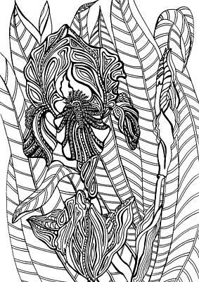 Animals Drawings - Iris by Jennifer Wheatley Wolf
