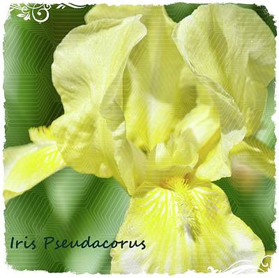 Traditional Bells Rights Managed Images - Iris Pseudacorus Royalty-Free Image by Maria Keady