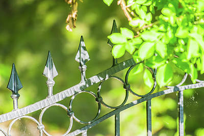 Royalty-Free and Rights-Managed Images - Iron Fence with climbing plant in the sunshine UK by David Ridley