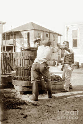 Blue Hues - Italian men in a backyard making wine making in a wooden wine press Monterey 1920 by California Views Archives Mr Pat Hathaway Archives