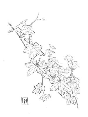 Black And White Ink Illustrations - Ivy Leaves in My Garden by Luisa Millicent