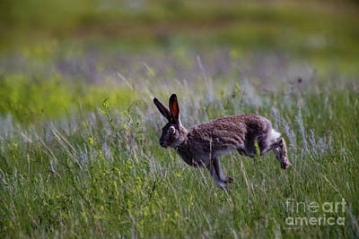Anne Geddes Collection - Jack rabbit on the go by Jeff Swan