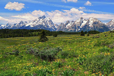 Photograph - Jackson Hole Spring by Greg Norrell