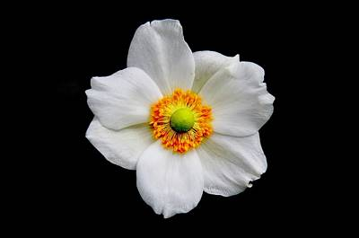 Photograph - Japanese Anemone by Allen Nice-Webb