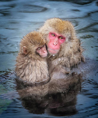 Featured Tapestry Designs - Japanese Snow Monkey Mom and Baby II by Joan Carroll