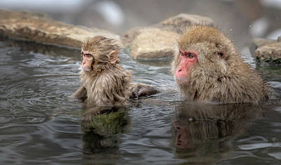 Queen Rights Managed Images - Japanese Snow Monkey Mom and Baby III Royalty-Free Image by Joan Carroll