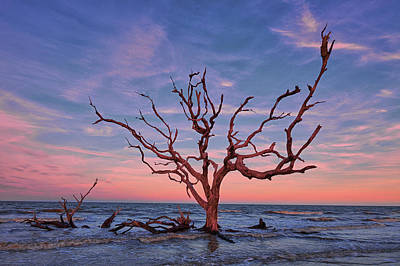 Royalty-Free and Rights-Managed Images - Jekyll Island Oak by Jon Glaser