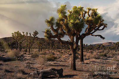 On Trend Breakfast - Joshua Tree Sunset by Sandra Bronstein
