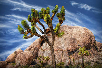Anne Geddes - Joshua Tree with Large Boulders in Joshua Tree National Park by Randall Nyhof
