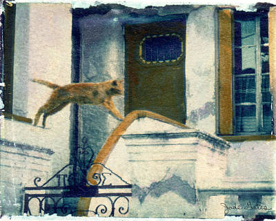 Photograph - Jumping Cat by Jade Gates