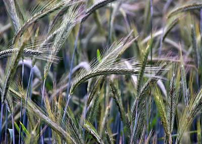 Latidude Image - June Grasses in Northern Virginia by Gregory Strong