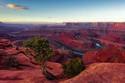 Advertising Archives - Juniper at Dead Horse Point by Andrew Soundarajan