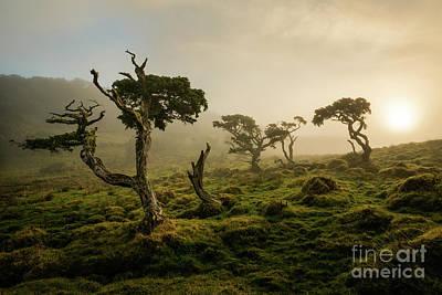 Photograph - Jurassic World by Bruno Azera