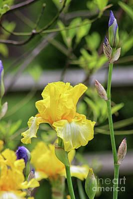 Photograph - Just a Garden Scene by Karen Adams