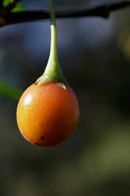 On Trend At The Pool - Kangaroo Apple by Graham Palmer