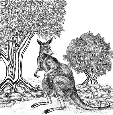 Animals Drawings - Kangaroo  by Jennifer Wheatley Wolf