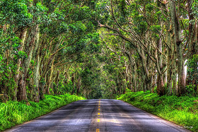 Sean Rights Managed Images - Kauai HI The Tree Tunnel Gateway Eucalyptus Trees South Shore Landscape Art Royalty-Free Image by Reid Callaway
