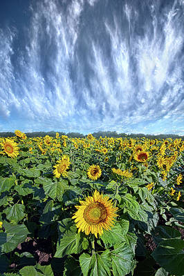 Staff Picks Cortney Herron - Keep Your Face To The Son by Phil Koch