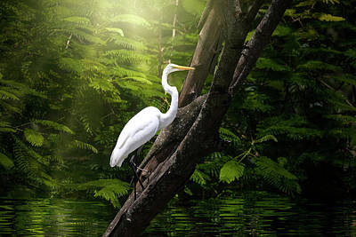 World War 2 Action Photography Royalty Free Images - Kingdom of the Great White Egret  Royalty-Free Image by Mark Andrew Thomas