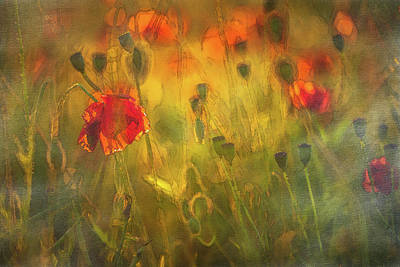 Grateful Dead - Kingswindford Poppies by Chris Fletcher