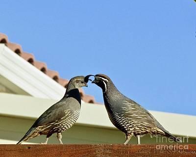 Staff Picks Cortney Herron - Kissing Quail by Phyllis Kaltenbach