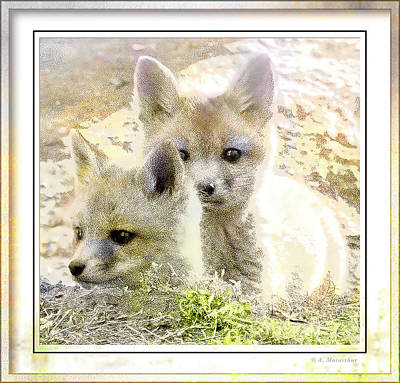 Animals Digital Art - Kit Foxes by A Macarthur Gurmankin