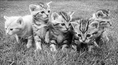 Royalty-Free and Rights-Managed Images - Kittens Cat Cat Puppy Rush 45170 by Celestial Images