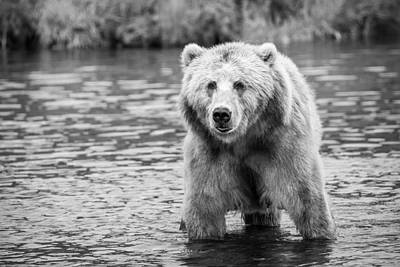Royalty-Free and Rights-Managed Images - Kodiak Brown Bear Adult Portrait Wildlife 158109 by Celestial Images