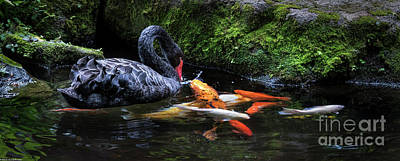 Abstract Animalia - Koy And Black Swan by Mitch Shindelbower