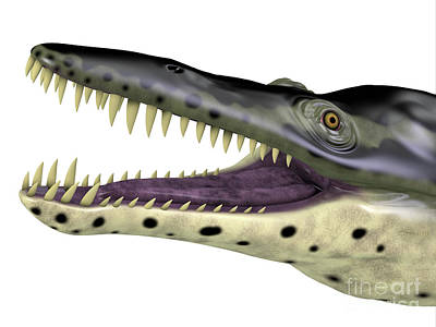 Studio Grafika Science - Kronosaurus Reptile Head by Corey Ford