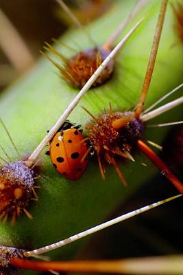 Travel Rights Managed Images - Lady Bug 2 Royalty-Free Image by Ronald Hunt