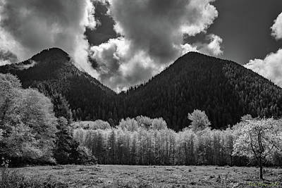 Antlers - Lake Quinault 5-21  10 by Mike Penney